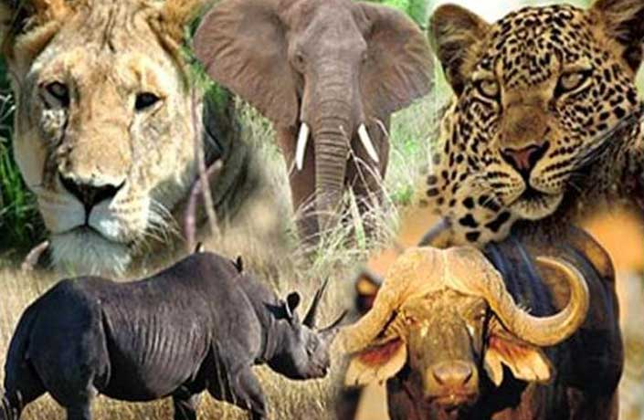 big 5 safari tours