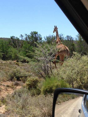 western cape garden route guided tour 17